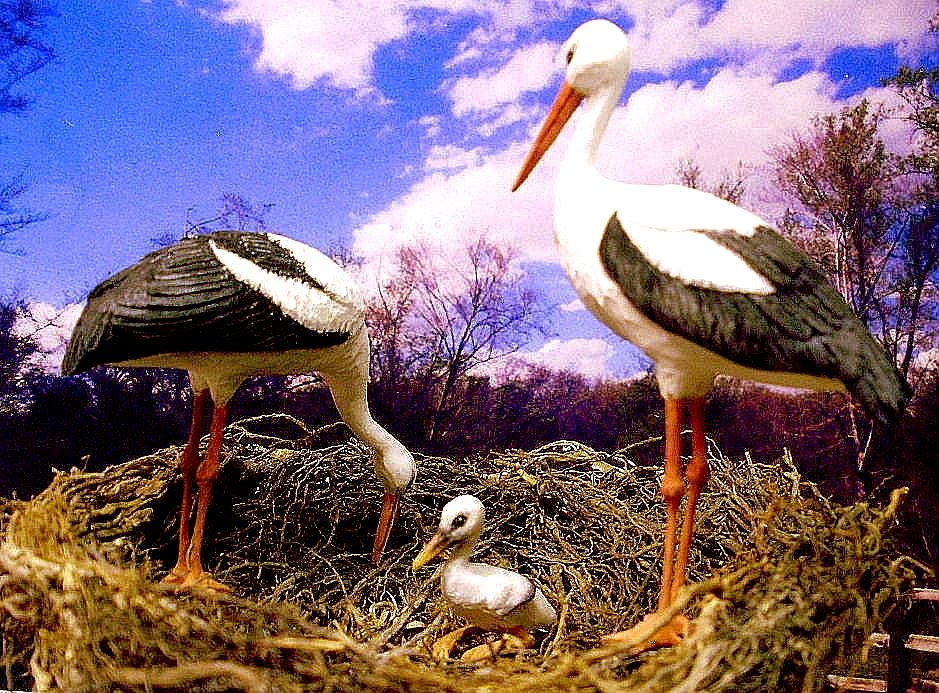 hand carved hand painted wood miniature stork family.